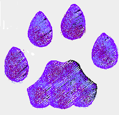 puma-paw2