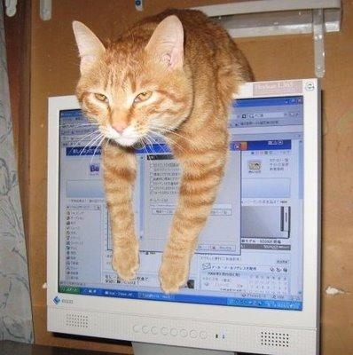 Je suis sur le chat!! - Page 4 Cat-computer-2