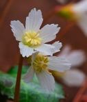 little flowere