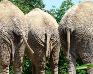 And then there were four gop debate tonight live blog with an animal twist sky dancing - Elephant assis ...