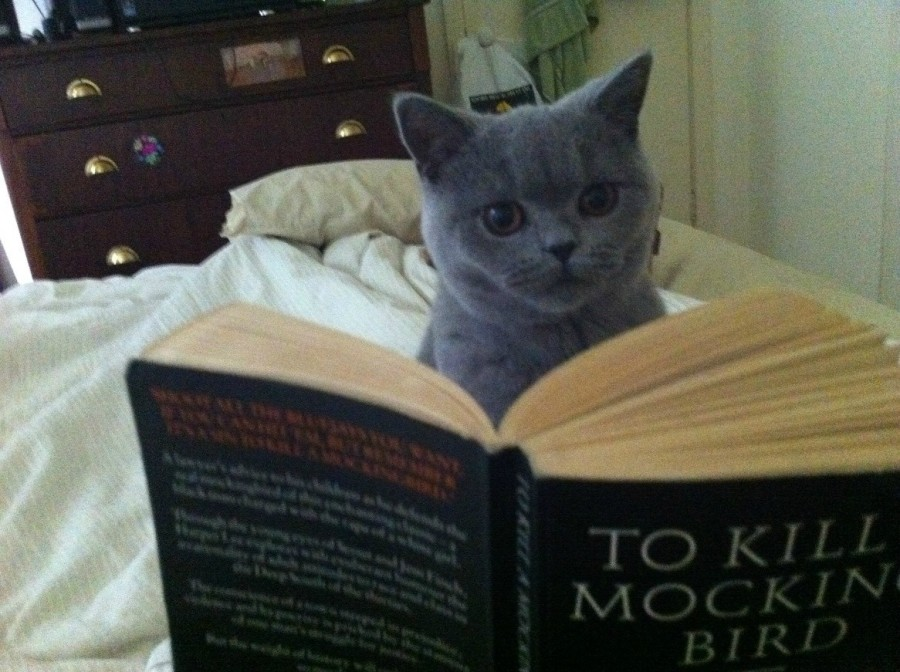 cat-reading-to-kill-a-mockingbird