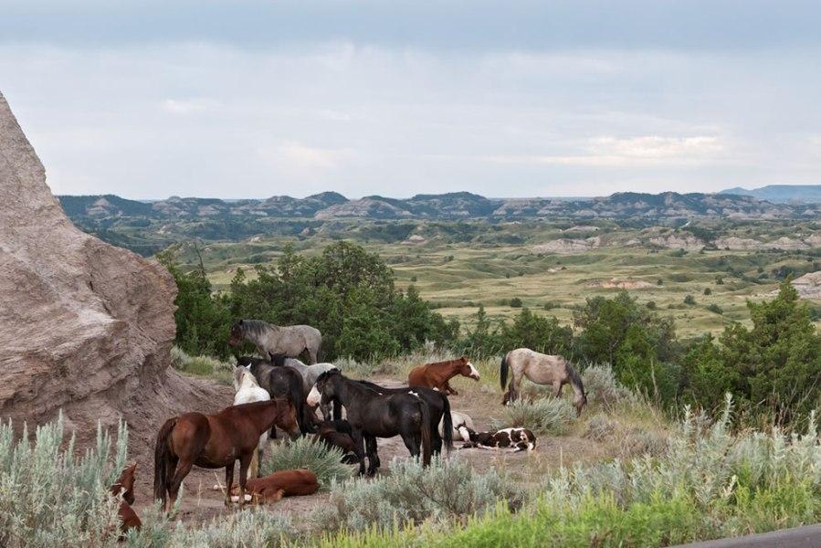 North Dakota Badlands--where I'd like to be this morning