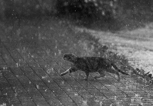Kaķa dvēsele lietū