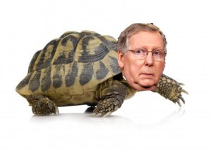 mitchmconnell turtle