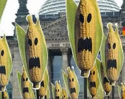 zombie corn
