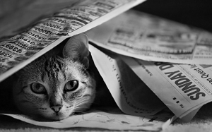 sunday paper cat