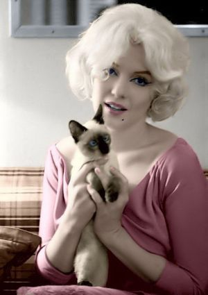 marilyn.cat