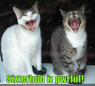 sisterhood lol cats