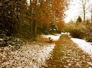 November snow1