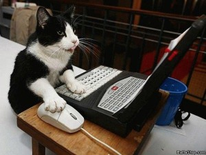 Cat_Surfing_The_Web