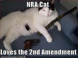 NRA cat