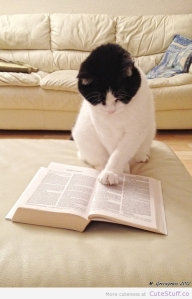 cat-reading-a-book