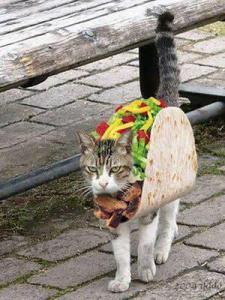 cat taco
