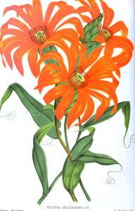 Botanical - Flower - Orange flowers