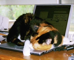 cat computer sleeping