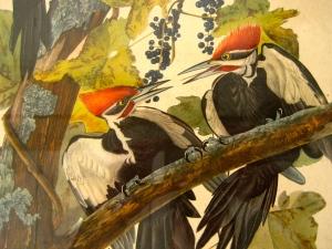 woodpecker-close2