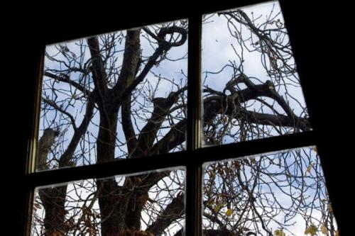 In this Nov. 14, 2007 file photo the chestnut tree which comforted Anne Frank while she hid from the Nazis during World War II, as seen from the attic window in the secret annex at the Anne Frank House in Amsterdam, Netherlands The monumental chestnut tree has fallen over on Monday, Aug. 23, a spokeswoman for the Anne Frank Museum says. Peter Dejong/AP/File