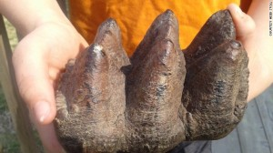 Part of a mastodon tooth