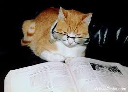 cat reading paper