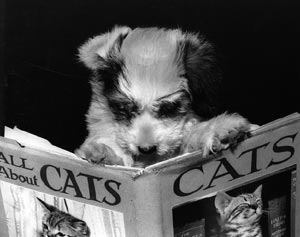 dog_reading_catbook
