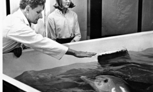 John Lilly with dolphin