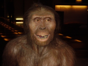 """Australopithecus Afarensis AKA """"Lucy"""""""