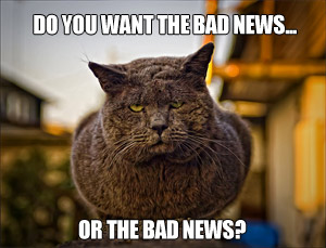 bad-news-cat