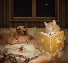 dog and cat reading