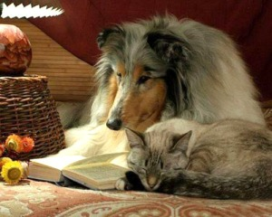 dog-reading-cat-sleeping_zps02c52057