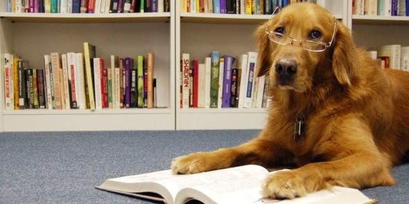 o-DOG-READING-A-BOOK-facebook