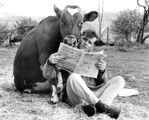 cow reading