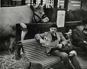 cow reading2
