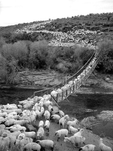 Sheep Bridge by Mountain Mike on Flickr