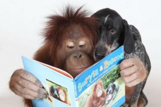 animals reading1