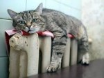 cat on radiator1