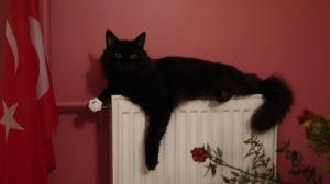 cat on radiator10