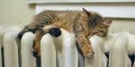 cat on radiator5
