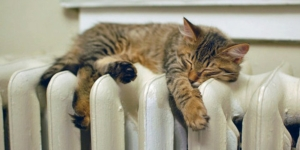 cat on radiator5