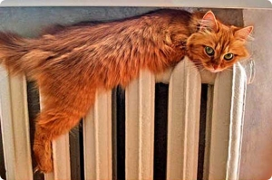 cat on radiator7