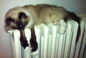 cat on radiator8