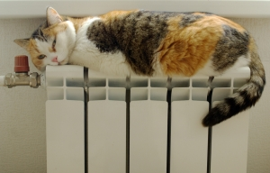 Cat basking in the radiator