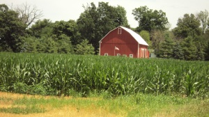 "Indiana corn, ""knee high by the Fourth of July."""