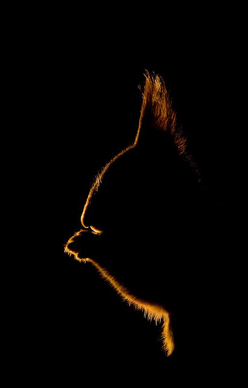 Silhouette of Trump's hair in the glow of NYC lights....as he plans his next ambush.