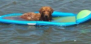 dog-days-of-summer (1)