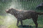 dog-days-of-summer