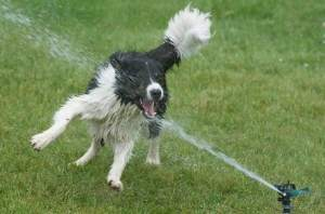 dog-summer-1