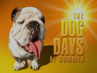 dog_days_summer