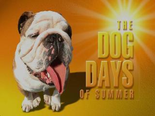 dog_days_summer