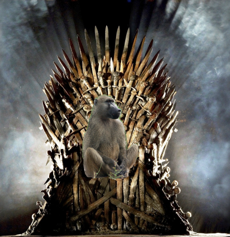 baboon on throne