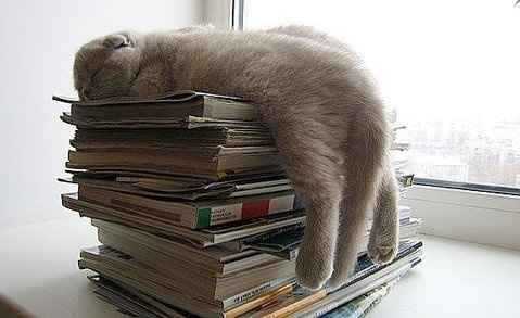 cat asleep with books